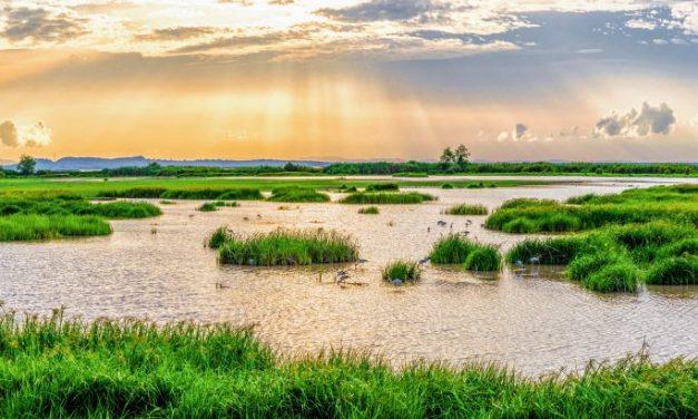 Nature provides valuable sanitation services