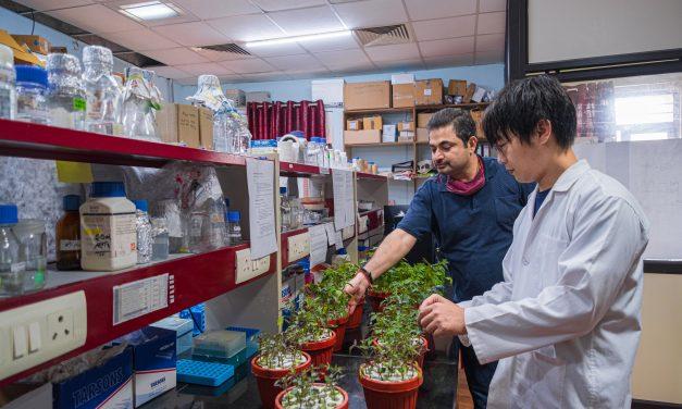 UoH-ARCI team develops nano-DAP fertilizer with enhanced agronomic use efficiency