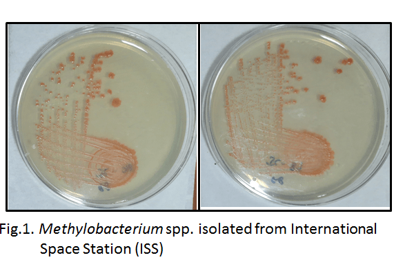 NASA's JPL and UoH collaboration identifies novel bacterial strains that may help in space farming